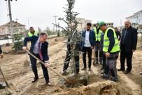 KOZLUCA - Ertuğrulgazi Mahallesi 110 Ağaçlık Yeni Oksijen Deposuna Kavuştu