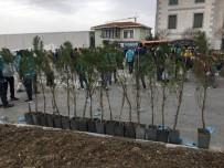 BAKIRKÖY CUMHURİYET BAŞSAVCILIĞI - Esenyurt'ta Denetimli Serbestlik Hükümlüleri Ağaç Dikti