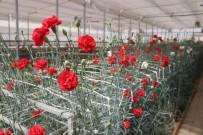 LALE SOĞANI - Seracılığa Öncü Olarak Projede, Zambak Ve Karanfiller Çiçek Açtı