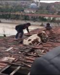 Yozgat'ta Otlamaya Çıkan İnek Çatıya Düştü