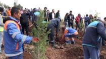 TÜRK ORDUSU - Afrin Şehitleri Unutulmadı