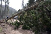 Ağaçlar Fırtınanın Şiddetine Dayanamadı