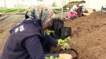 OZAN BALCı - Diyarbakır Çiçek Bahçesine Dönecek