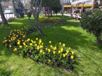 LALE SOĞANI - İlkadım'da Bahar