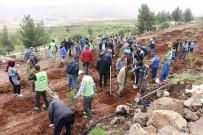 KORUMA MÜDÜRÜ - Kilis'te 2 Bin Fidan Daha Toprakla Buluştu