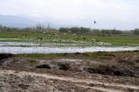 Turnalar Aras Nehrine Gelmeye Başladı