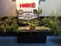 CIKCILLI - Alanya'da Uyuşturucu Operasyonu