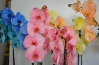 GIDA BOYASI - Gıda Boyası İle Boyanan Orkideler Yoğun İlgi Görüyor