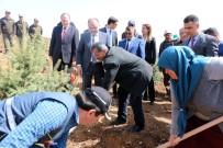 ŞEHİT AİLESİ - Şehit Sercan Kara İçin Hatıra Ormanı Oluşturuldu