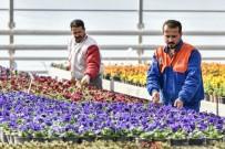 ERDAL İNÖNÜ - 2 Milyon Çiçek Muratpaşa Parklarını Renklendirecek.