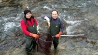 MUSTAFA AKKUŞ - Aşırı Avcılık Deredeki Balıkları Bitiriyor