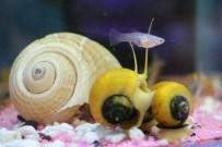 PETSHOP - Balık Besleyen Çocuğun Odak Noktası Artar