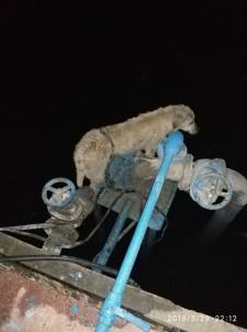 Kabloya Dolanan Köpeği İtfaiye Kurtardı