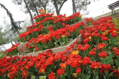 Kepez'de Park Ve Bahçeler Laleler İle Donatıldı