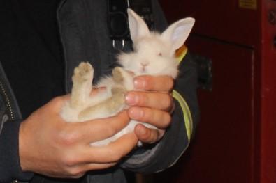 Otomobilin Motoruna Giren Tavşanı Yakalama Operasyonu