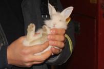 KANBER - Tavşan Kurtarma Operasyonu Açıklaması Aracın Sökülmedik Yeri Kalmadı