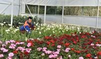 TAFLAN - 21 Bin 765 Bitki Ve Çiçek Gün Sayıyor