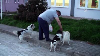 Bartın'da Köpeğe Tekme Atan Kişi Özür Diledi