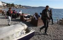 İŞPORTACI - Bodrum Sahilerinde Şaşırtan Görüntü