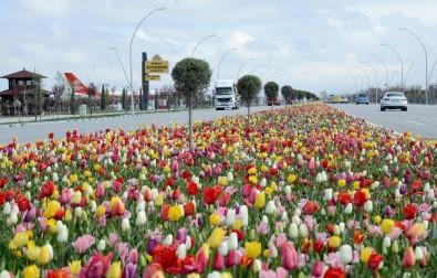 Konya'da 'Lale Mevsimi' Başladı