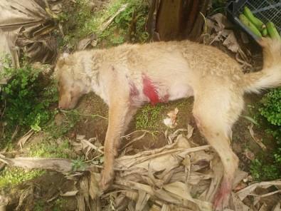 Mersin'de Seraya Giren Köpek Bekçi Tarafından Vuruldu