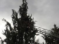 İTFAİYE ERİ - Ağaca Takılan Güvercinleri Kurtarma Operasyonu
