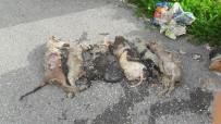 TOSMUR - Alanya'da Hayvan Katliamı