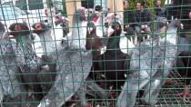 TERTIP KOMITESI - Osmaniye'de '13. Güvercin Festivali' Başladı