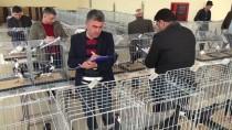 TERTIP KOMITESI - Osmaniye'deki '13. Güvercin Festivali' Tamamlandı
