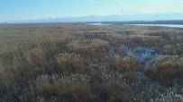 ENERJİ SANTRALİ - Göl Kenarındaki Sazlar Enerjiye Dönüşecek