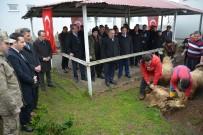 Kabadüz'de Mehmetçikler İçin Kurban Kesildi