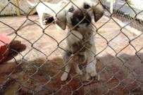 İSMET İNÖNÜ - Sokak Hayvanları İçin Dans Edip Kilo Vererek Mama Aldılar