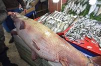 BALIKÇI ESNAFI - Dev Kurşun Balığı Görenleri Hayrete Düşürüyor