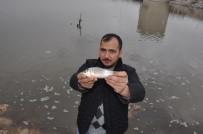 BOĞAZKÖY - Balıklar Karaya Vurdu