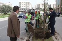BUCA BELEDİYESİ - Buca'ya Her Gün 30 Ağaç