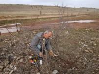 Akdağmadeni'nde Orman Alanındaki Mahlep Ve Badem Ağaçları Aşılanıyor