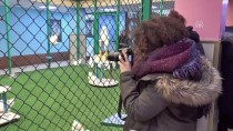 VAN GÖLÜ - Avrupalı Gençler Van Kedisini Sevdi