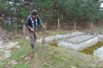 ÇAM KESE - Bolu'da, Çam Köse Böcekleriyle Mücadele Başladı