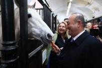 EMIN AVCı - Çavuşoğlu, Kraliyet Binicilik Okulu'nu Ziyaret Etti