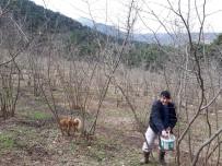 Fındık Ağaçlarının Bakımı Yapıldı