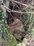 YAKıNCA - Kayalıklardan Kopan Taş Evin Üzerine Düştü