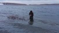 VAN GÖLÜ - (Özel) Aygır Gölü'nde Zebra Midye Tehlikesi