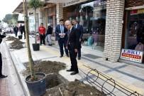 YAĞMUR SUYU - Başkan Kayda, Prestij Caddesinde Ağaç Dikti