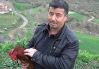 Bıçağı Gören Horoz 'Anne' Dedi