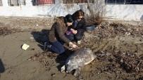 KÜÇÜKKUYU - Çanakkale'de Ölü Caretta Caretta Sahile Vurdu