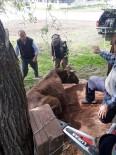 Ağaçların Arasına Sıkışan İnek, AFAD Tarafından Kurtarıldı