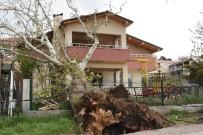 FERİBOT SEFERLERİ - Asırlık Ağaç Evin Çatısına Devrildi