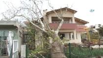 FERİBOT SEFERLERİ - Çanakkale'de Fırtına 100 Yıllık Çınar Ağacını Devirdi