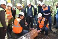 İŞÇİ GÜVENLİĞİ - Eskişehir Orman Bölge Müdürlüğü Eğitimlerini Tamamladı