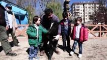 ŞELALE - Evcil Hayvanlar Parkı'nın Yeni Üyeleri